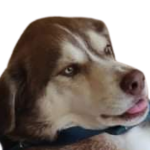 South Texas College Library Services